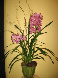 Orchid Plan